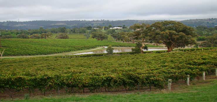 Mocandunda vinyards in Clare Valley