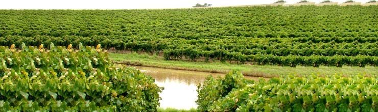 Mocandunda vineyards in Clare Valley